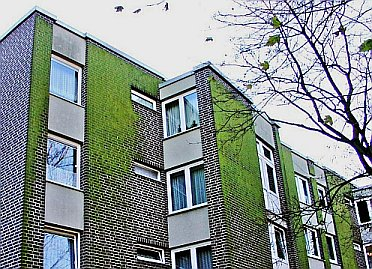 Plastikriemchen Hochhaus WDVS Dämmfassade, Algenbefall mit Grünalgen, Verschmutzung und Leopardeffekt Green Algue & Rotten Damp Wet ETICS - External Thermal Insulation Composite Systems / External Wall Insulation