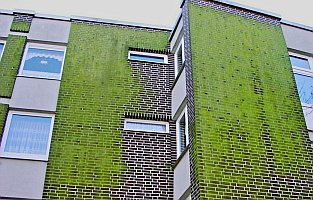 Energetische Sanierung im Bestand: Plastikziegel WDVS Dämmfassade, Veralgung, Verschmutzung und Leopardeffekt Green Algue & Rotten Damp Wet ETICS - External Thermal Insulation Composite Systems / External Wall Insulation